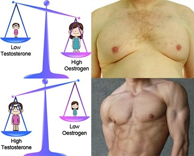 Oestrogen-Testosterone-Ratio.jpg